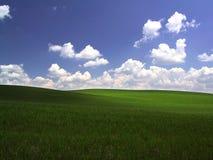 зеленый цвет поля Стоковые Фотографии RF