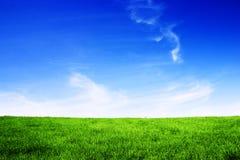 зеленый цвет поля Стоковые Изображения RF
