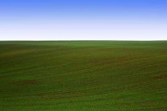 зеленый цвет поля Стоковые Изображения
