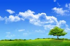 зеленый цвет поля Стоковая Фотография