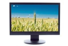зеленый цвет поля sreen пшеница tv Стоковые Изображения RF