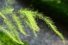 Зеленый цвет предложения перед темной предпосылкой Стоковое Изображение
