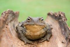 зеленый цвет предпосылки близкий к жабе вверх стоковое фото