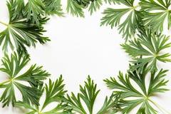 зеленый цвет предпосылки выходит белизна Взгляд сверху с космосом экземпляра изолировано Стоковое Фото