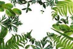 зеленый цвет предпосылки выходит белизна Взгляд сверху с космосом экземпляра желтый цвет картины сердца цветков падения бабочки ф Стоковое Фото