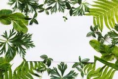 зеленый цвет предпосылки выходит белизна Взгляд сверху с космосом экземпляра Стоковое Изображение RF