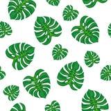 зеленый цвет предпосылки выходит белизна картина безшовная Стоковое Изображение RF
