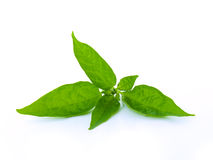зеленый цвет предпосылки выходит белизна Стоковые Изображения RF