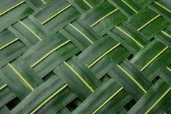 зеленый цвет предпосылки выходит ладонь Стоковые Фотографии RF