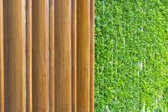 зеленый цвет предпосылки выходит стена Стоковые Изображения
