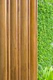 зеленый цвет предпосылки выходит стена Стоковое фото RF