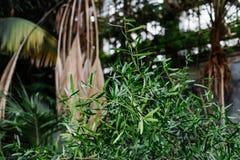 зеленый цвет предпосылки выходит текстура Заводы и растительность в ботаническом саде Стоковое Фото