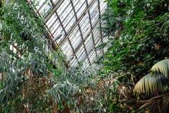 зеленый цвет предпосылки выходит текстура Заводы и растительность в ботаническом саде Стоковое фото RF