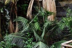 зеленый цвет предпосылки выходит текстура Заводы и растительность в ботаническом саде Стоковые Фотографии RF