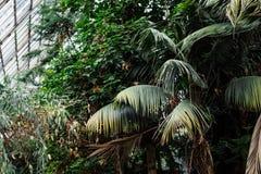 зеленый цвет предпосылки выходит текстура Заводы и растительность в ботаническом саде Стоковая Фотография RF