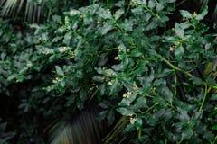 зеленый цвет предпосылки выходит текстура Заводы и растительность в ботаническом саде Стоковые Изображения RF