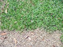 зеленый цвет предпосылки коричневый Стоковое Изображение RF