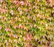 Зеленый цвет предпосылки листьев Стоковая Фотография RF