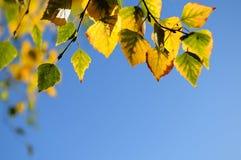 зеленый цвет предпосылки осени выходит желтый цвет Стоковое Фото