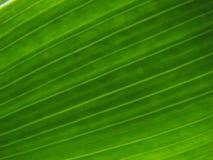зеленый цвет предпосылки Стоковые Фото