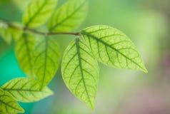 зеленый цвет предпосылки выходит природа Стоковые Изображения RF