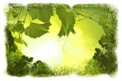 зеленый цвет предпосылок флористический Стоковое Изображение