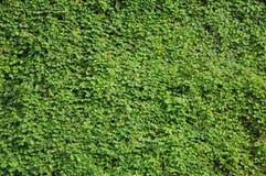 Зеленый цвет природы Стоковая Фотография