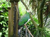 зеленый цвет птицы Стоковое Изображение