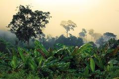 зеленый цвет пущи банана стоковая фотография