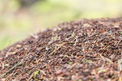 зеленый цвет пущи листва anthill стоковые изображения