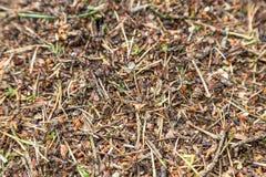 зеленый цвет пущи листва anthill стоковое фото rf