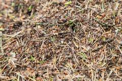 зеленый цвет пущи листва anthill стоковая фотография rf