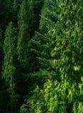 зеленый цвет пущи Стоковое Изображение