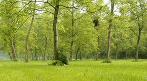 зеленый цвет пущи стоковое изображение rf