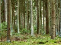 зеленый цвет пущи Стоковые Фотографии RF