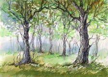 зеленый цвет пущи бесплатная иллюстрация
