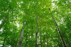 зеленый цвет пущи Стоковая Фотография RF