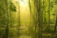 зеленый цвет пущи Стоковое Фото
