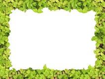 зеленый цвет рамки Стоковые Изображения RF