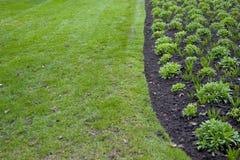 зеленый цвет сада стоковая фотография