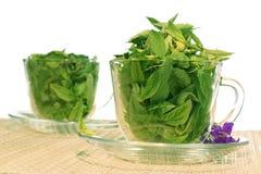 зеленый цвет свежести Стоковые Изображения RF