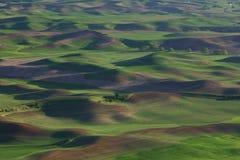 зеленый цвет сельскохозяйствення угодье Стоковые Изображения RF