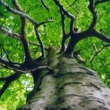 зеленый цвет сени Стоковая Фотография