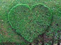 зеленый цвет сердца Стоковые Изображения RF
