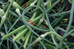 зеленый цвет скручиваемостей Стоковое фото RF