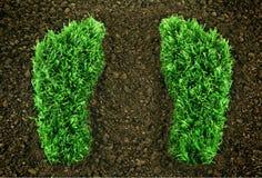 зеленый цвет следов ноги травянистый Стоковые Изображения RF