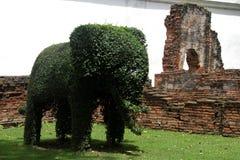 зеленый цвет слона bush стоковые изображения rf