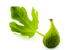 зеленый цвет смоквы Стоковое Изображение RF