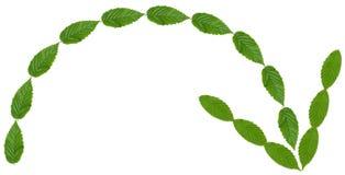 зеленый цвет стрелки Стоковое Изображение RF