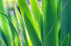зеленый цвет травы Британского Колумбии Стоковое Фото